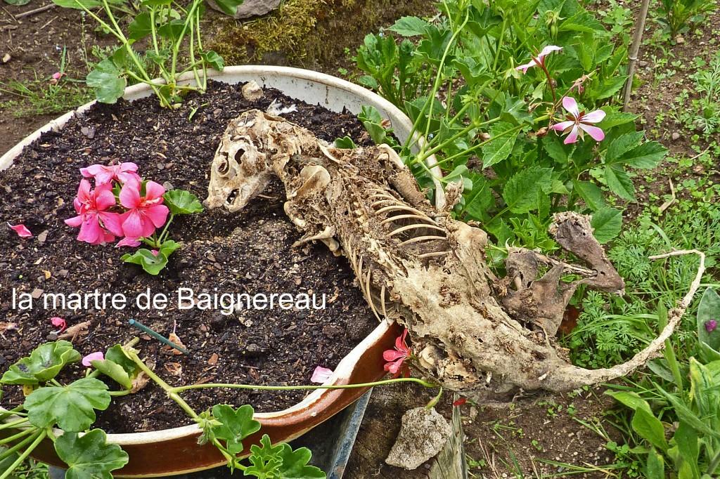 la martre de Baignereau